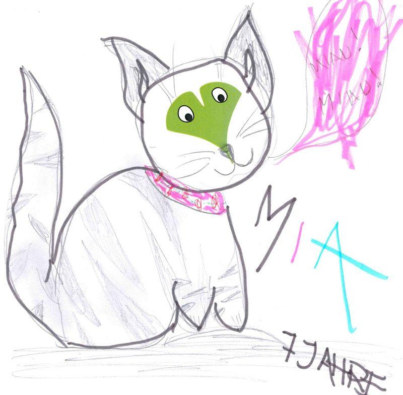 Katze – Mia, 7 Jahre (Gewinner Oktober 2017)